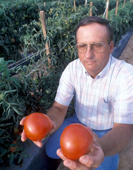 Randy Gardner made great progress with blight resistance for tomatoes