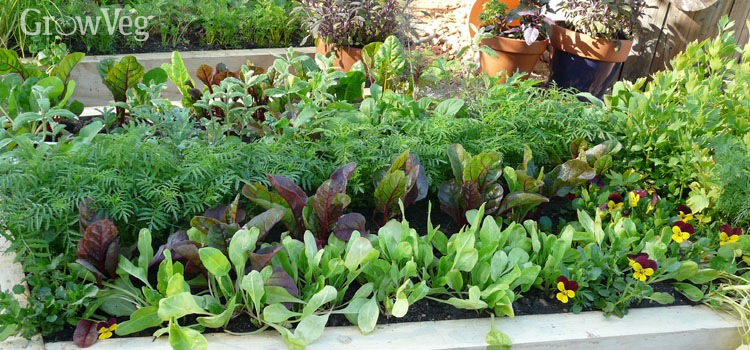 Crop rotation in raised beds
