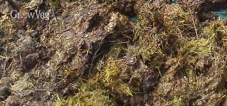 Rotting grass