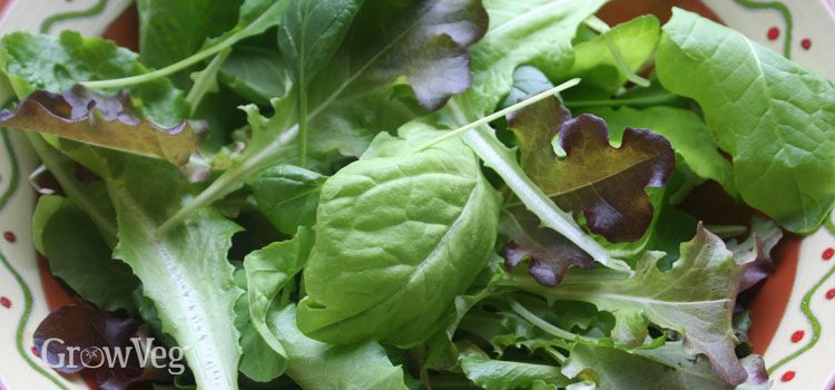 Cut salad leaves