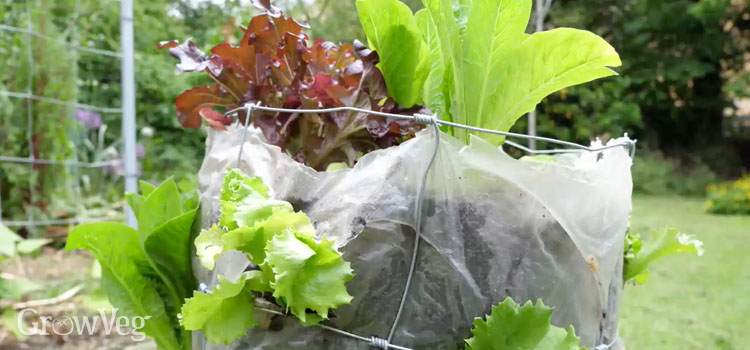 https://s3.eu-west-2.amazonaws.com/growinginteractive/blog/salad-tower-lettuces-2x.jpg