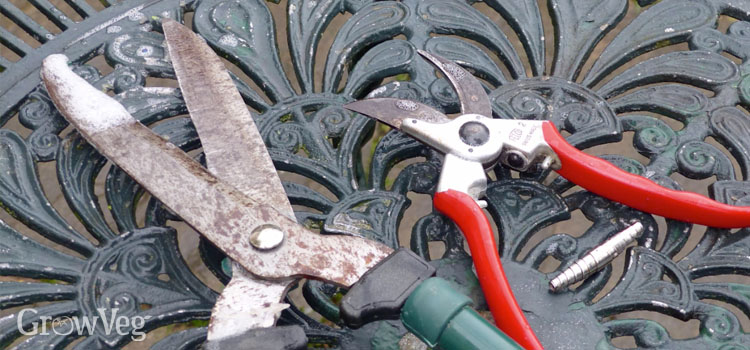 Maintaining shears and secateurs