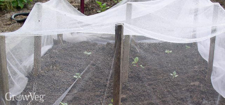 Prepared seedling bed with netting cover