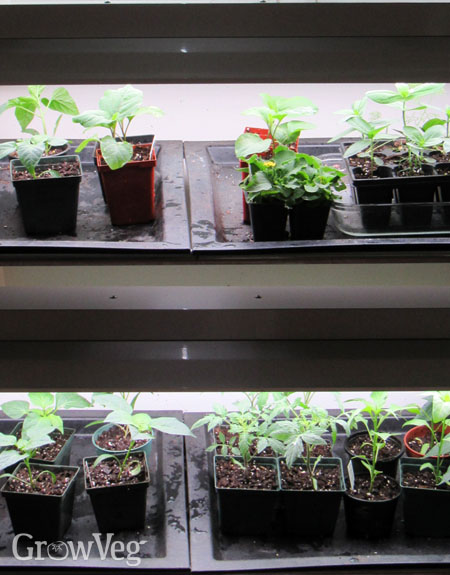 3 Shopping Tips For Plant Grow Lights