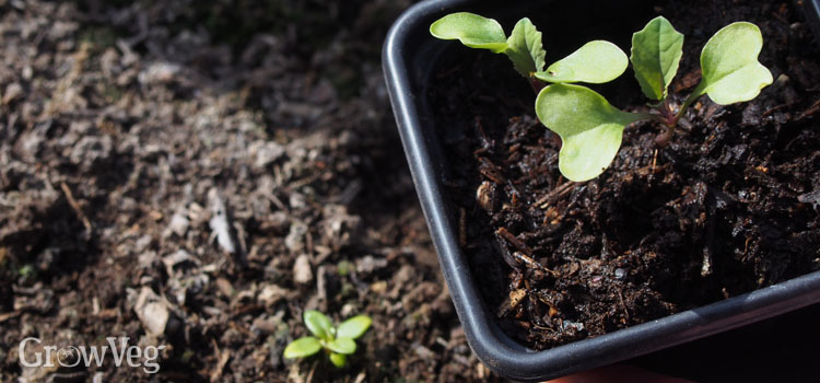 """""""Seedlings"""