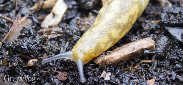 """""""Slug"""