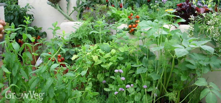 Growing Fruit And Vegetables In Urban Gardens
