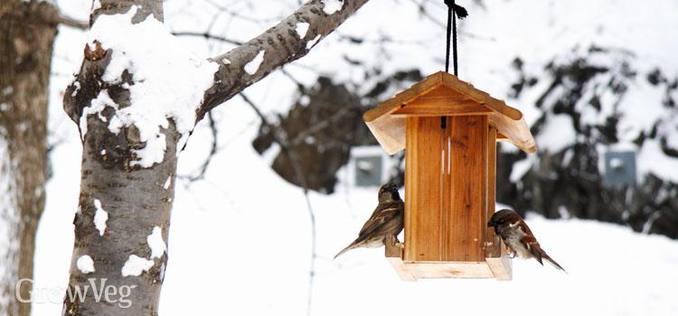 Sparrows on a bird feeder