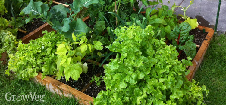 Square foot raised bed garden