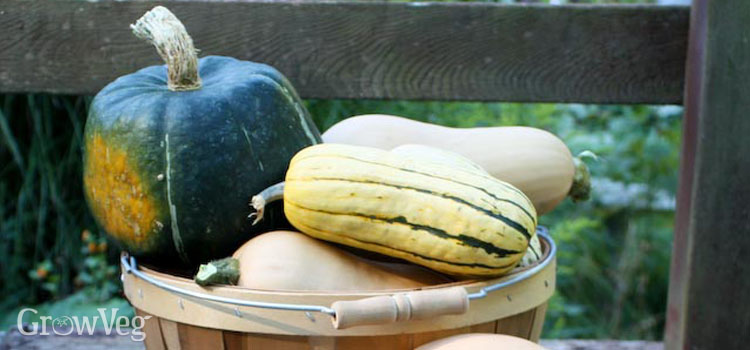 An amazing variety of winter squash are available to grow