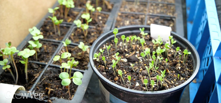 """Seedlings"
