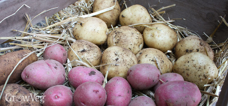 Tried And Tested Tips For Storing Potatoes Successfully