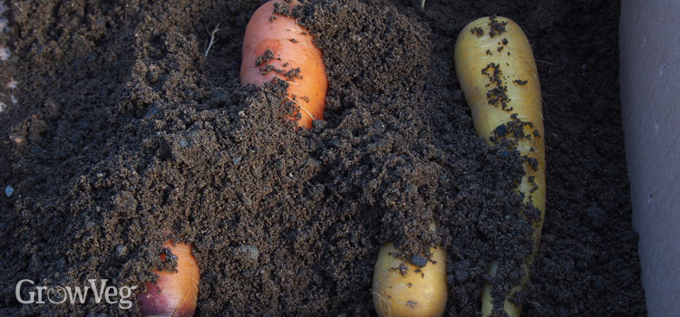 https://s3.eu-west-2.amazonaws.com/growinginteractive/blog/storing-root-vegetables-in-sand-carrots-2x.jpg