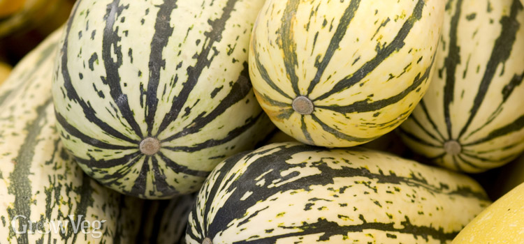 https://s3.eu-west-2.amazonaws.com/growinginteractive/blog/stripy-squashes-2x.jpg