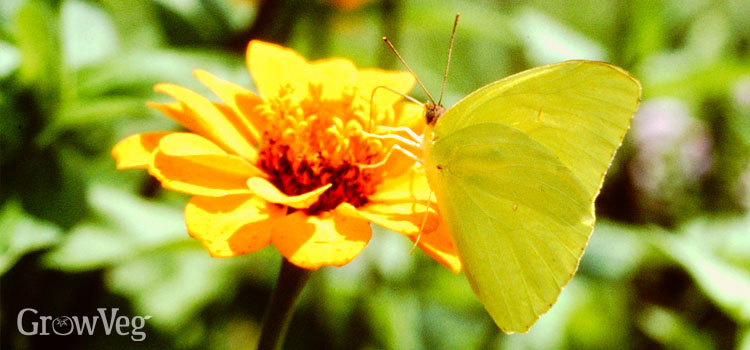 7 Simple Strategies to Prevent Garden Pests