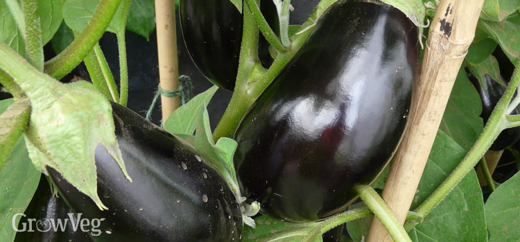 https://s3.eu-west-2.amazonaws.com/growinginteractive/blog/supporting-aubergine-branches-2x.jpg