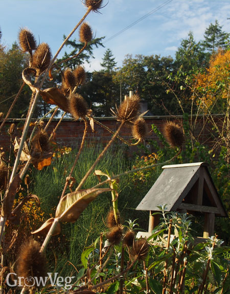 Teasel and bird table