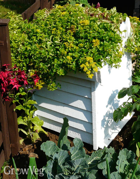 How To Plant A Green Roof On Your Shed