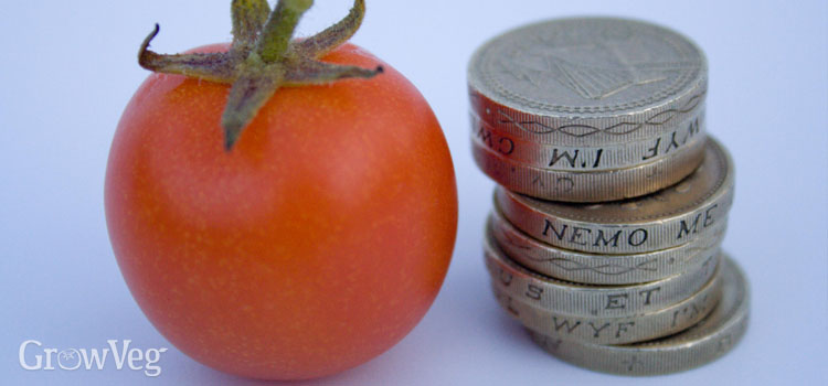 Tomato and coins
