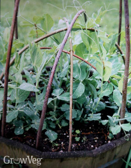 Twig tower for peas