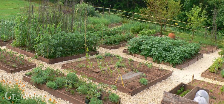 how to plan a vegetable garden a step by step guide rh growveg com backyard vegetable garden design ideas backyard vegetable garden ontario