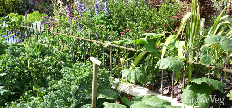 Growing flowers and vegetables together for companion planting