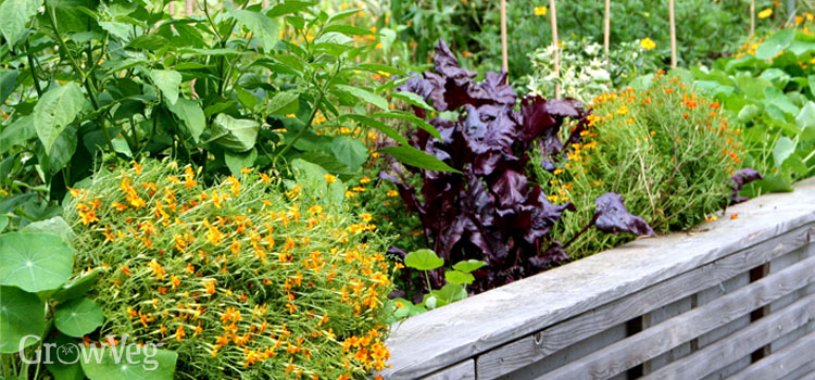 Maximize Your Space - Stunning Design Ideas for Small Gardens on raised garden bed cold frame, raised garden bed tree, raised garden bed garden, raised garden bed bench, raised garden bed table,
