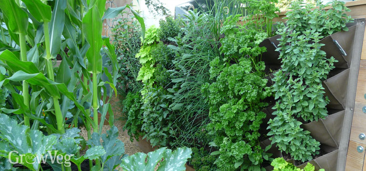 Vertical growing - a living wall