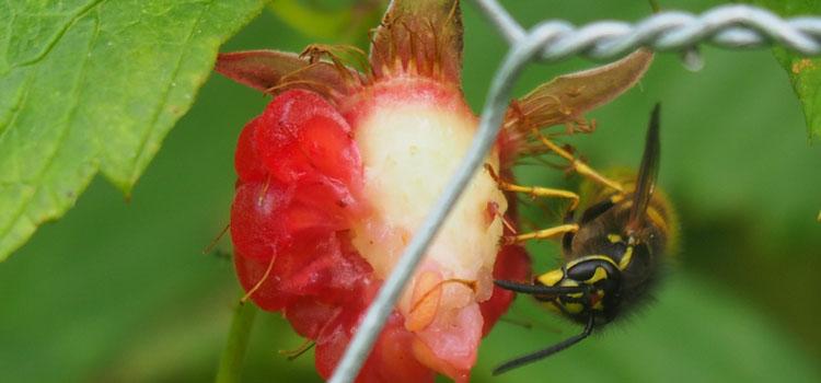 """""""Wasp"""