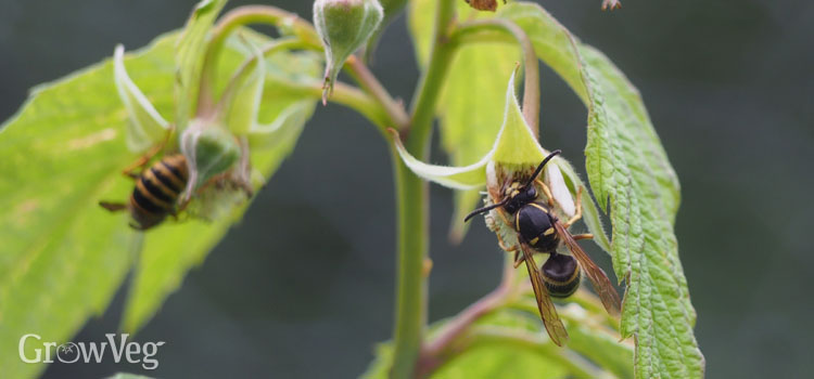 """Wasps"