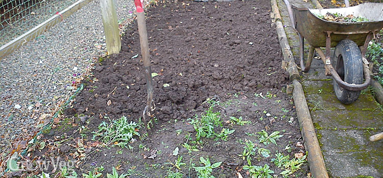 Weeding a vegetable bed