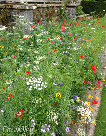 Growing Wildflowers For Bees And Butterflies