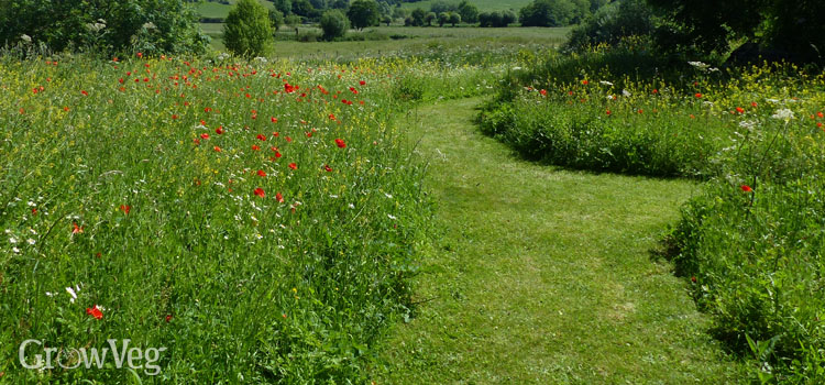 https://s3.eu-west-2.amazonaws.com/growinginteractive/blog/wildflower-meadow-path-2x.jpg