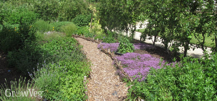 Woodchip paths in a herb garden
