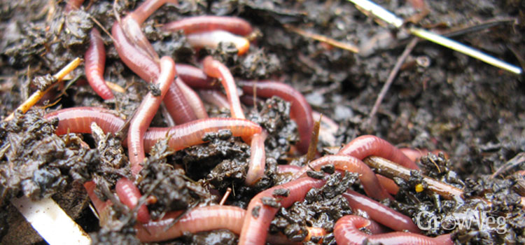 https://s3.eu-west-2.amazonaws.com/growinginteractive/blog/worms-in-compost-2x.jpg