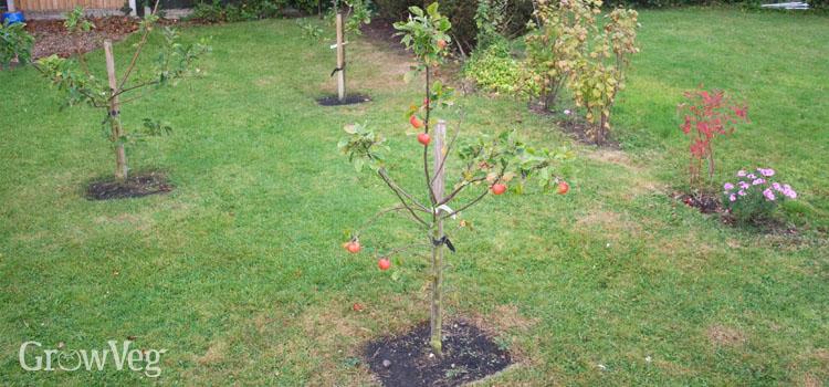 New fruit garden