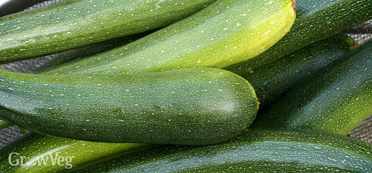 https://s3.eu-west-2.amazonaws.com/growinginteractive/blog/zucchini-harvest-2x.jpg