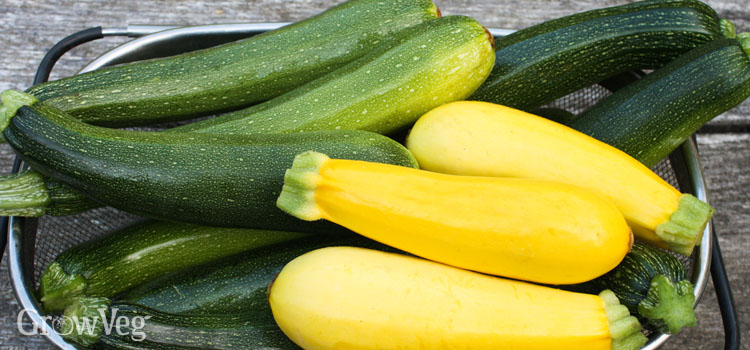 https://s3.eu-west-2.amazonaws.com/growinginteractive/blog/zucchini-sowing-to-harvest-green-yellow-2x.jpg