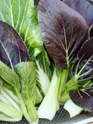 Bok Choy, also known as Pac Choi