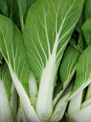 Chinese Cabbage, also known as Napa Cabage
