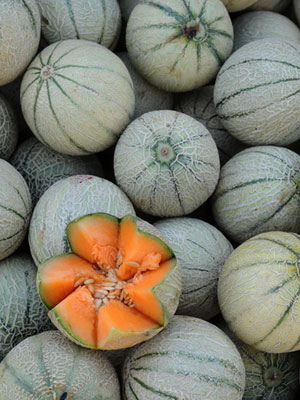 Rock Melon, also known as Cantaloupe