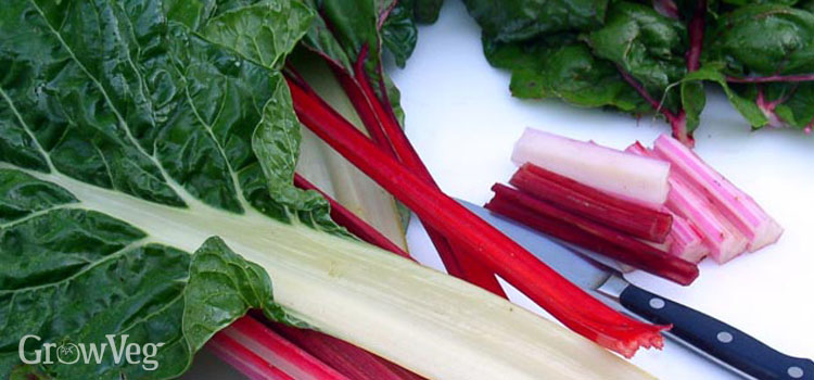 Swiss Chard, also known as Chard