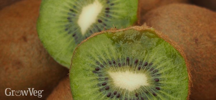 Kiwi, also known as Chinese Gooseberry