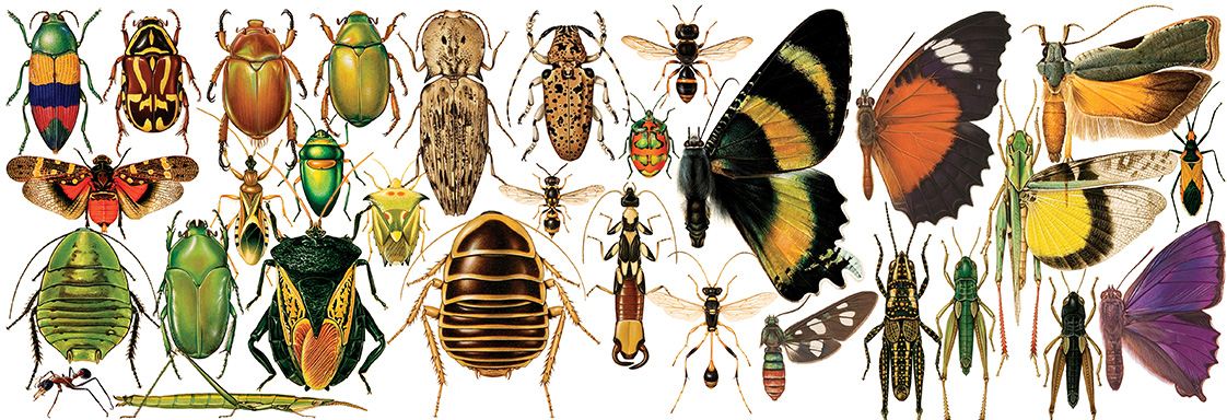 A selection of hand drawn and coloured insects including beetles, grasshoppers, moths and butterflies