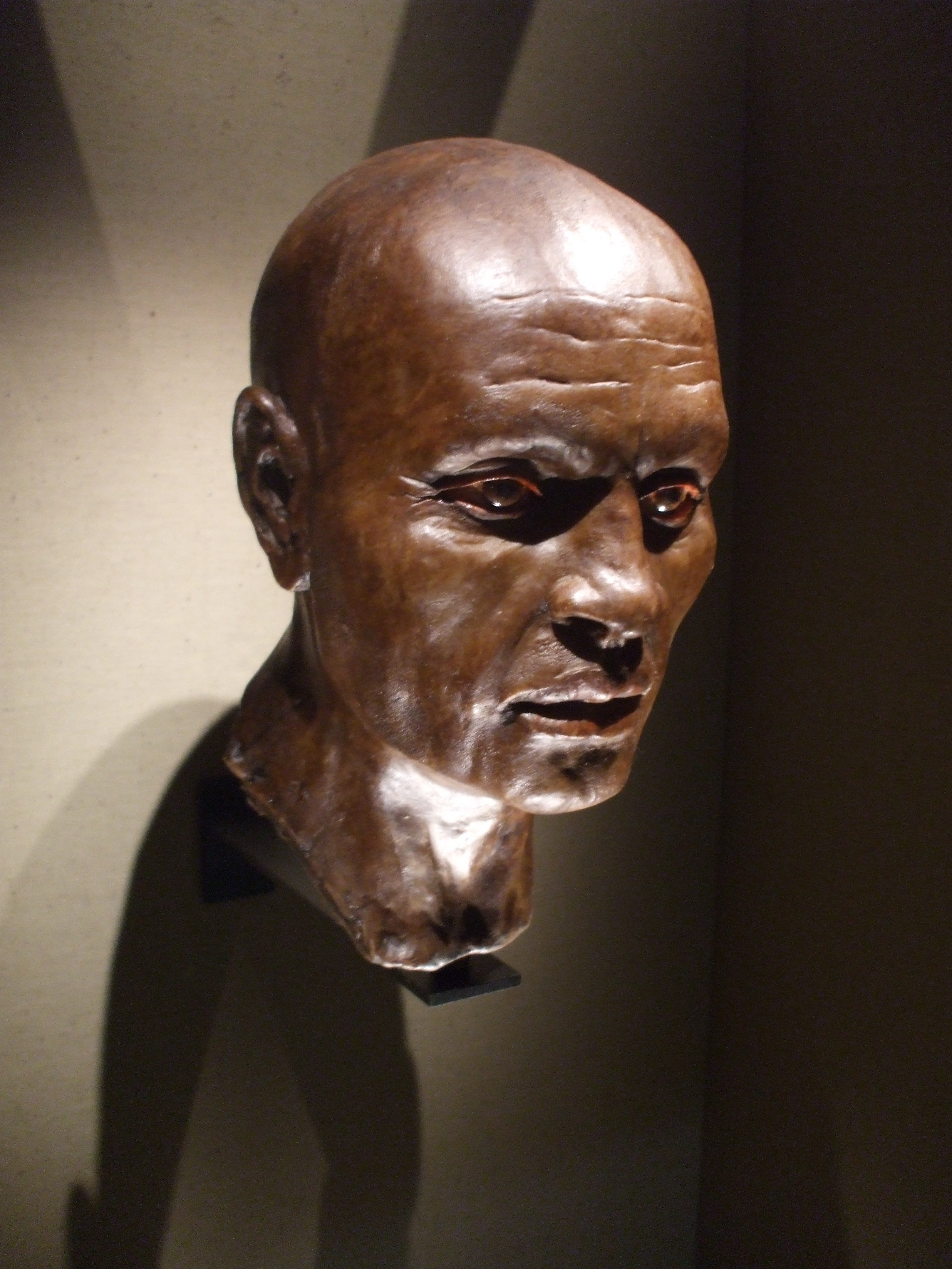 Photograph of a model of a man's head, with brown skin and shaved head.