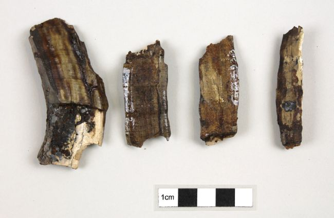 Four fragments of sub-fossilized hippo bone found at Armley, Leeds.  Each fragment is between approximately 4 and 8 centemetres long.