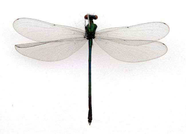 Photograph of a dragonfly resting on a pole