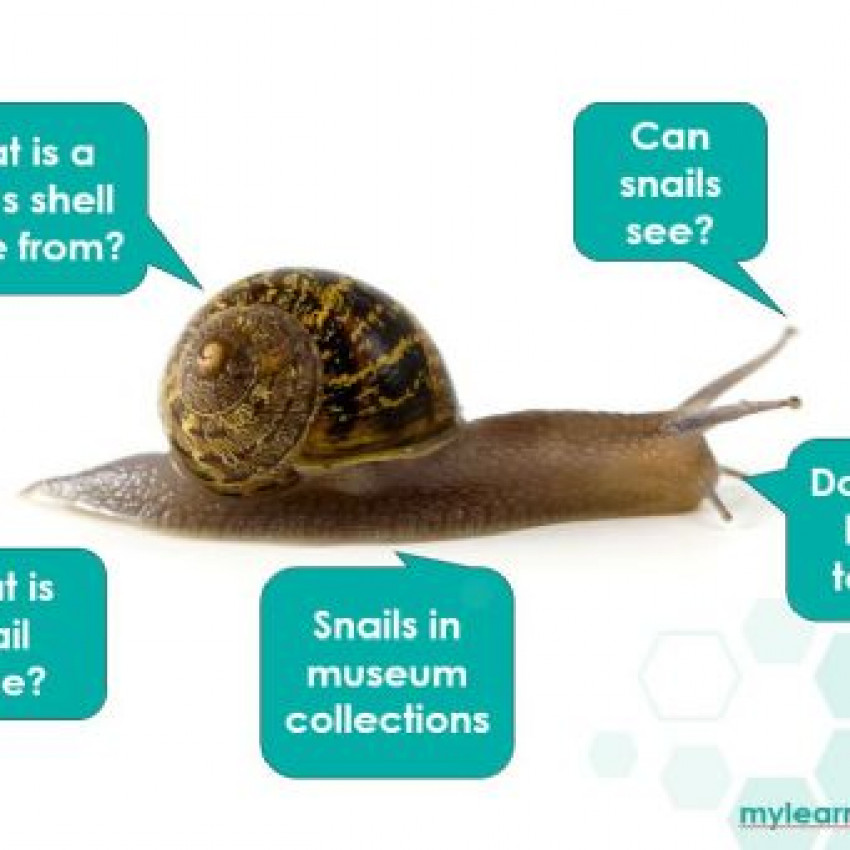 Amazing Snails Interactive Powerpoint