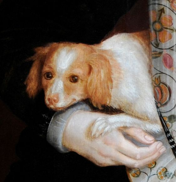 Detail of a 'Toy Dog' from a Portrait of Lady Bennet.  The dog is mostly whtie with brown ears and sides of the facew