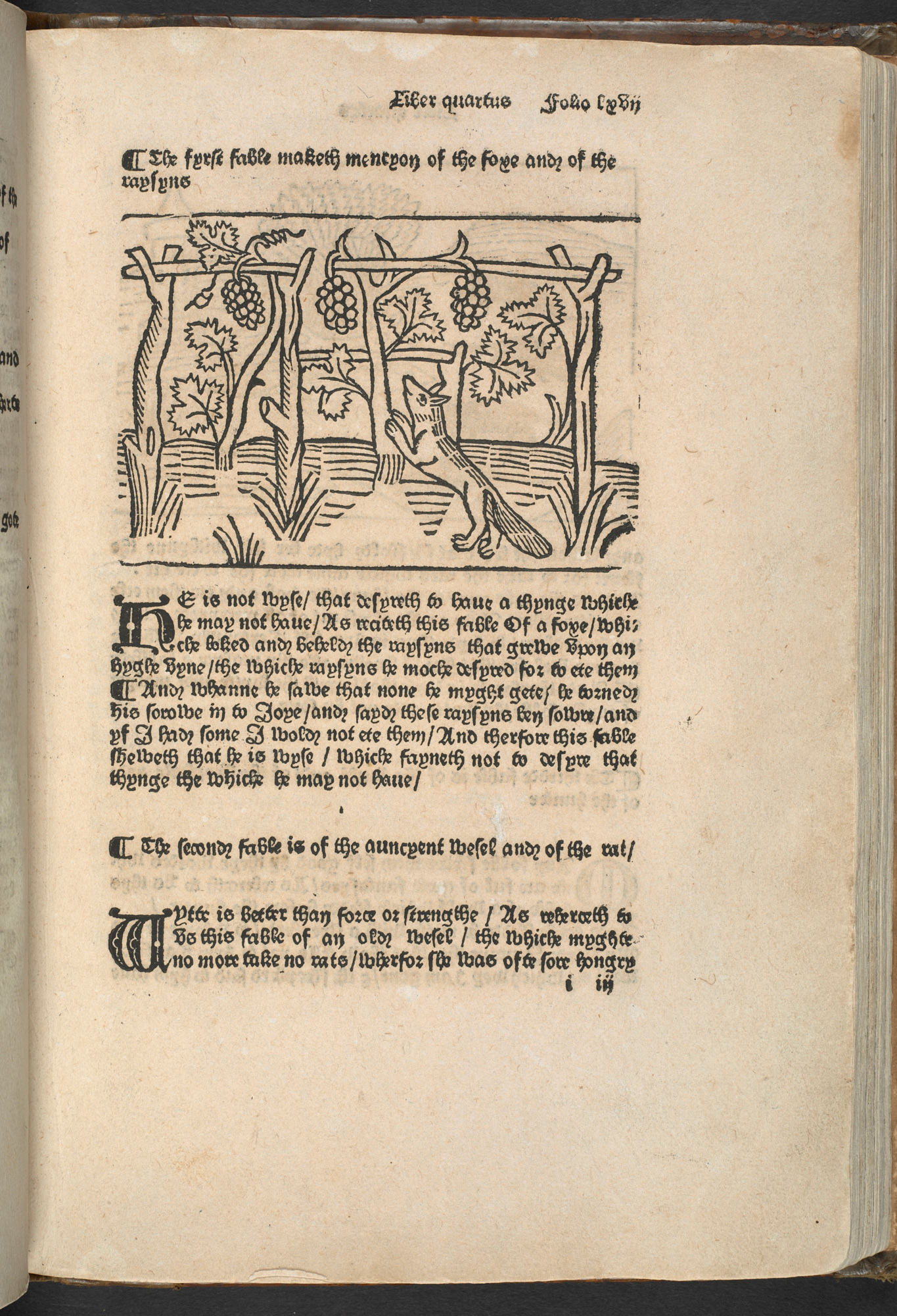 A printed page from a book, showing an image of a fox trying to reach some grapes, with writing printed underneath.